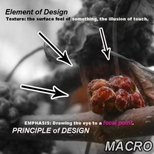 macroquinterojosewtext
