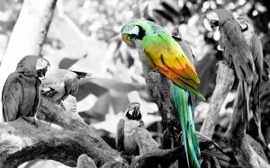 colorizinglopezjerry