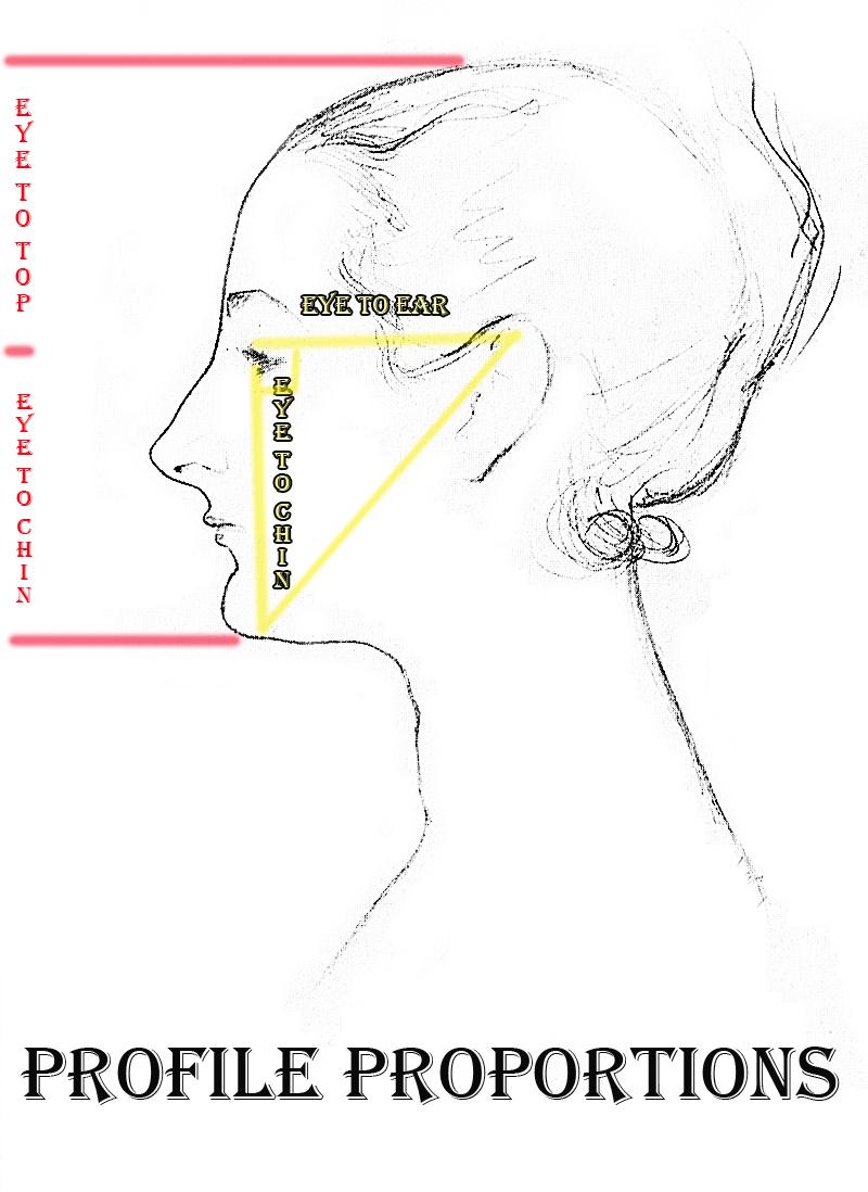 Human head profile proportions