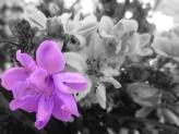 Pleaseant Flores Elizabeth