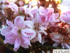 Macro 2 Flores Elizabeth